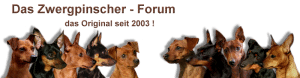Zwergpinscher Forum von http://www.das-zwergpinscher-forum.de/