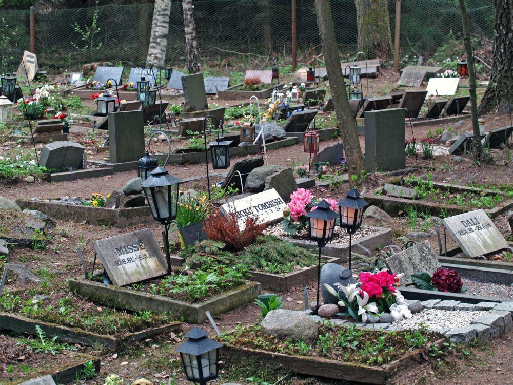 Zwergpinscher auf dem Tierfriedhof begraben